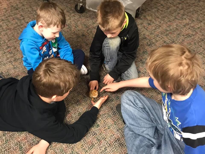 Kindergarten came to visit the chicks